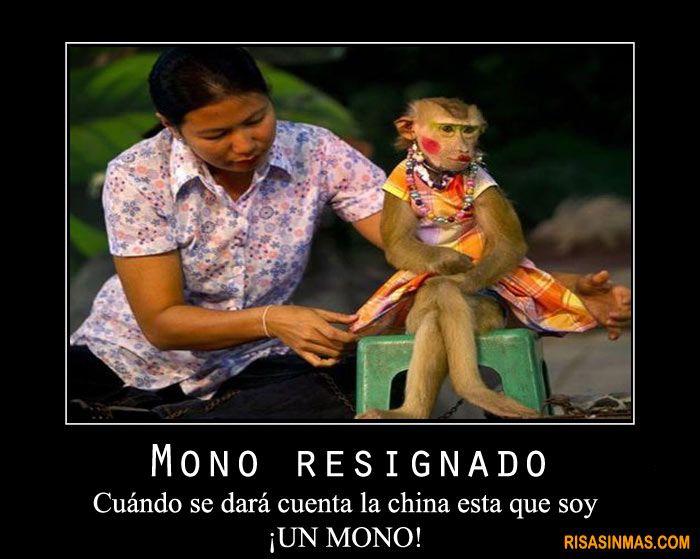 Mono resignado