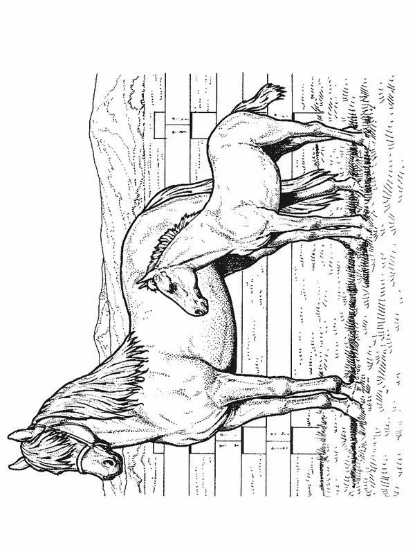 Horse Coloring Pages 47 #horse #coloring page #colouring page
