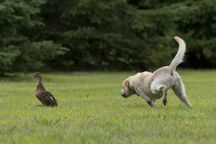 """8 Steps to Teaching Your Dog a Super-Strength """"Leave It"""" Command"""