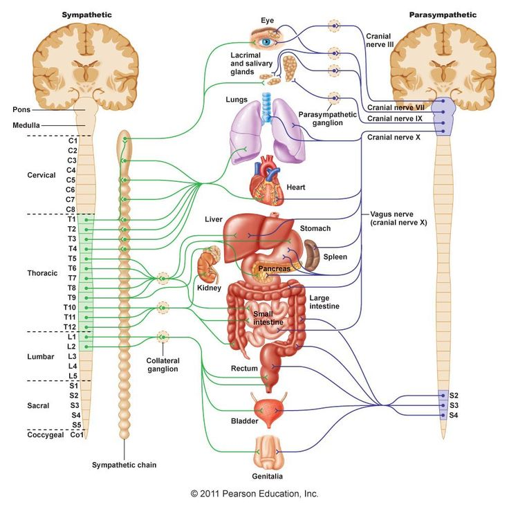 August 2015: Cell Fatigue - ME/CFS Research Blog: Immunological pathways which might induce dysautonomia in ME/CFS