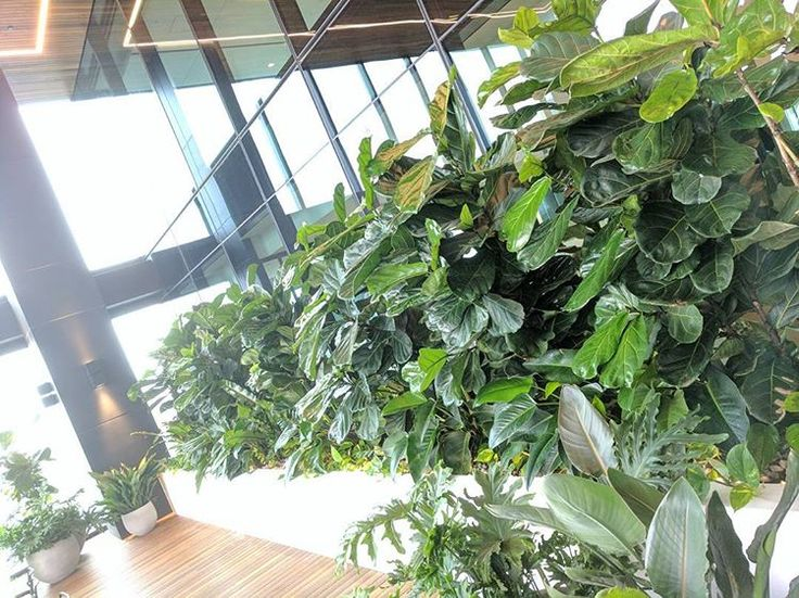 #fytogreenaustralia #fytogreen #rooftop #roofgarden #melbourne #docklandsmelb #hydroponics #plantsofinstagram #planteddesign