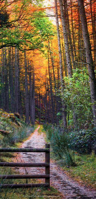 Colorful lane at the Elan Valley' ~ Wales, UK • Fragga on Flickr • http://en.wikipedia.org/wiki/Elan_Valley