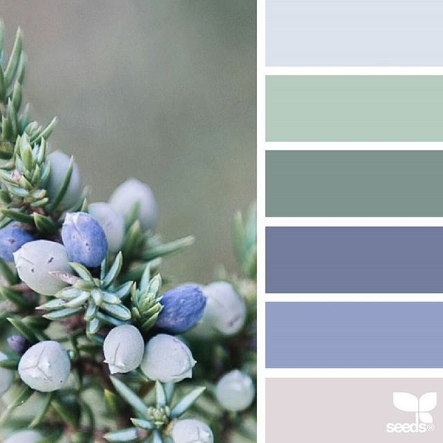today's inspiration image for { nature made hues } is by @arctic_stories ... thank you, Renate, for another wonderful #SeedsColor image share!