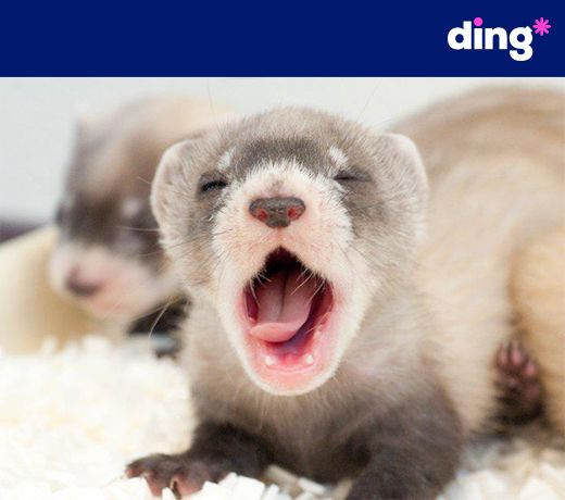 Yawwwnnnn! Whether its time for bed, or an early morning, you can always top up with ding*! www.ding.com