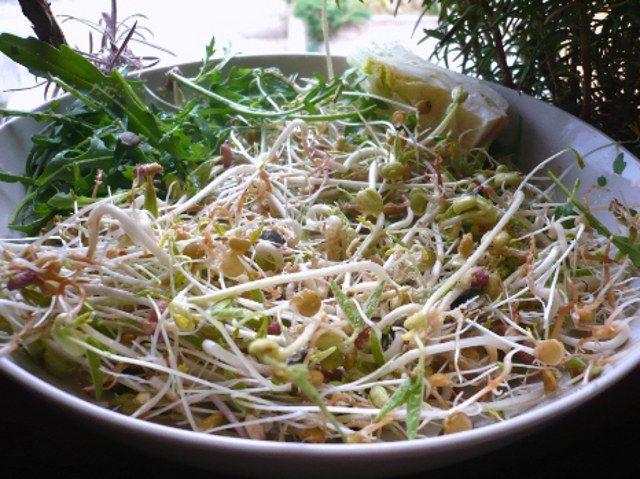 insalata germogli