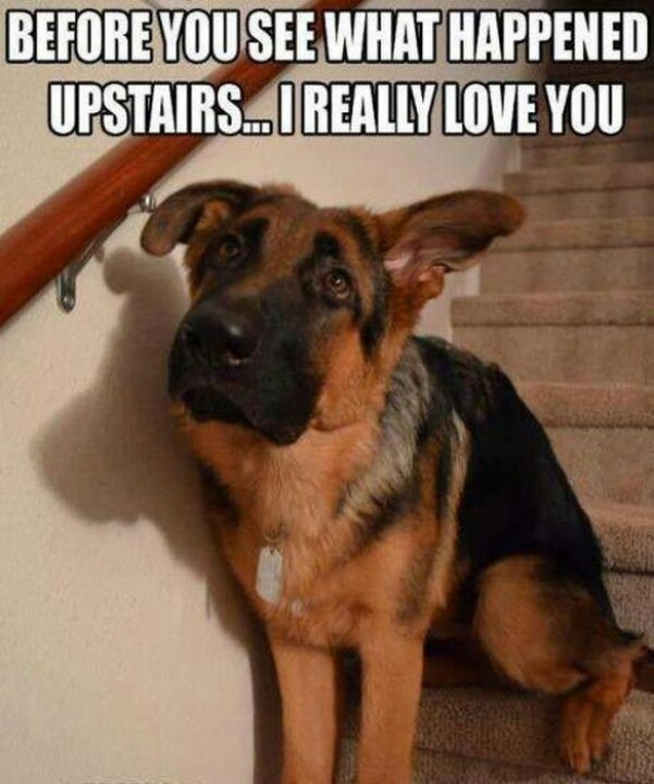 """oh man this made me laugh so hard. my dog Banner makes this face daily, when things """"happen""""."""