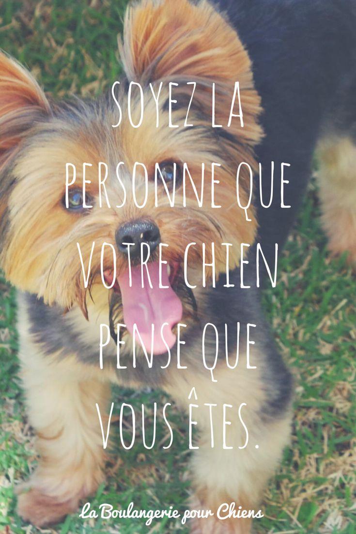 Soyez la personne que votre chien pense que vous êtes. Citation chien, La Boulangerie pour Chiens