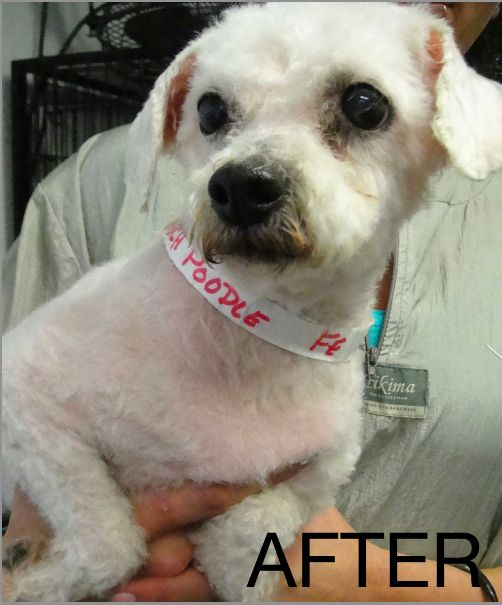 Puppy Mill Dogs: Before-and-After Photos via @Dogster & Catster