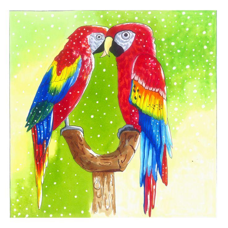 Parrots | drawn by Anastasia Opachanova