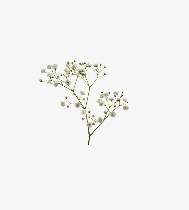 Flower Flower Png Images Flowers Wedding Drawing