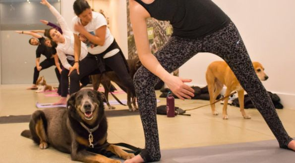 There's A Dog Yoga Class Happening In Toronto Today And It's Free