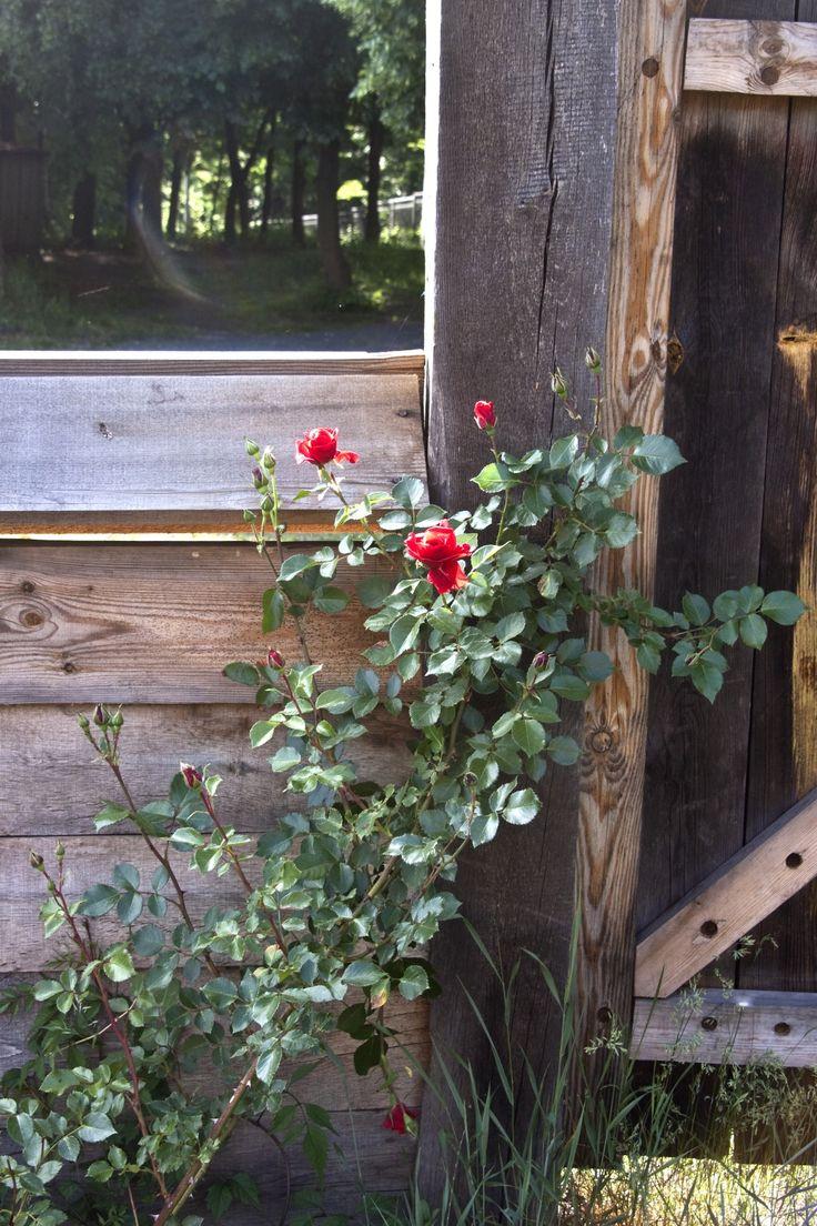 Best 25 cercas de madera ideas only on pinterest vallas - Cercas de madera ...