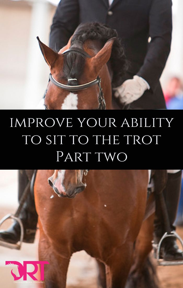 Learn how you can improve your sitting trot with this article