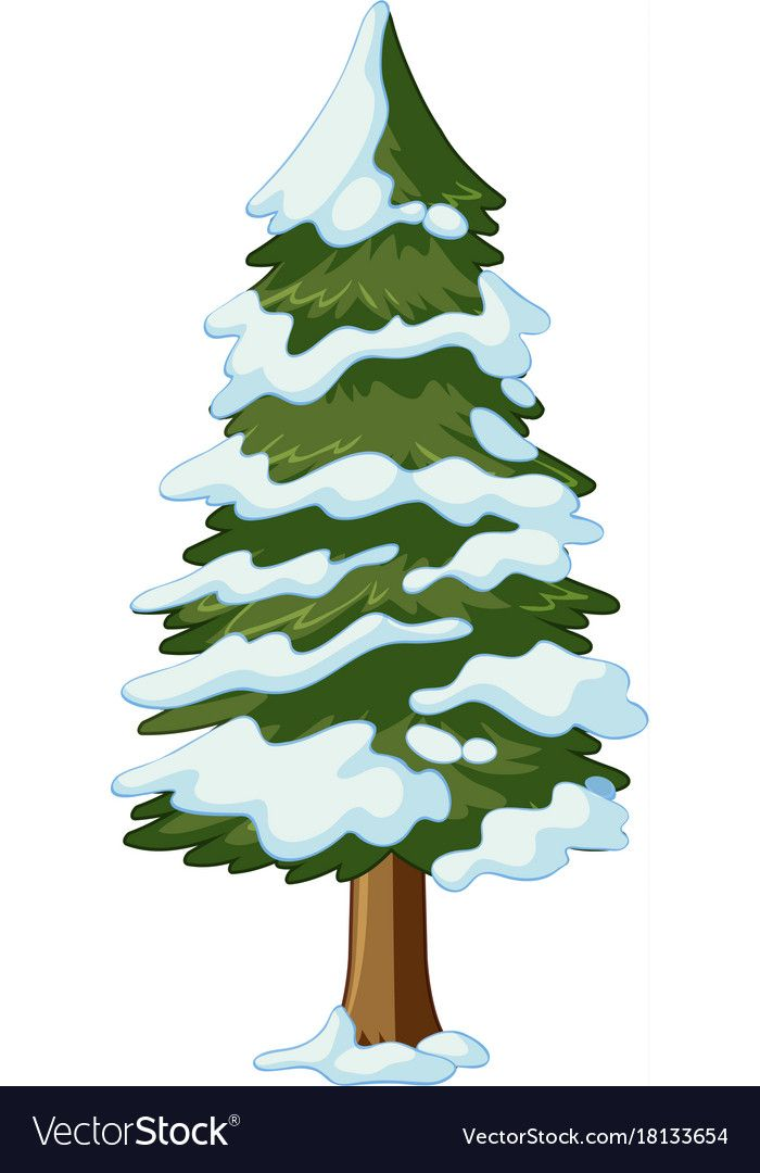 Pine Tree Covered With Snow Vector Image On Vectorstock Christmas Tree Drawing Snow Illustration Pine Tree Painting