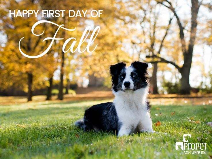 Summer may be over, but we have lots to look forward to in fall! 🍃🍂 #FirstDayofFall