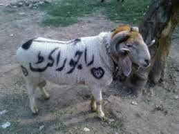 Funny Pictures, Jokes and Gifs / Animations: Eid ul Azha / Bakra Eid SMS in urdu/hindi Us din h...