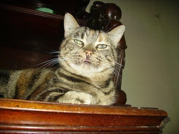 ACTU Animaux - SOS Asso en faillite - grosse urgence pour 40 chats - date butoir 25 septembre