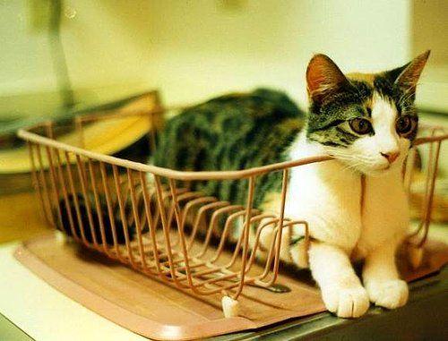 kedi ve dostluk temalı sözler ile ilgili görsel sonucu