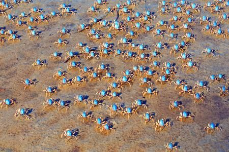 Blue soldier crabs in Port Stephens Photo by Donna G. - 2016 National Geographic Travel Photographer of the Year