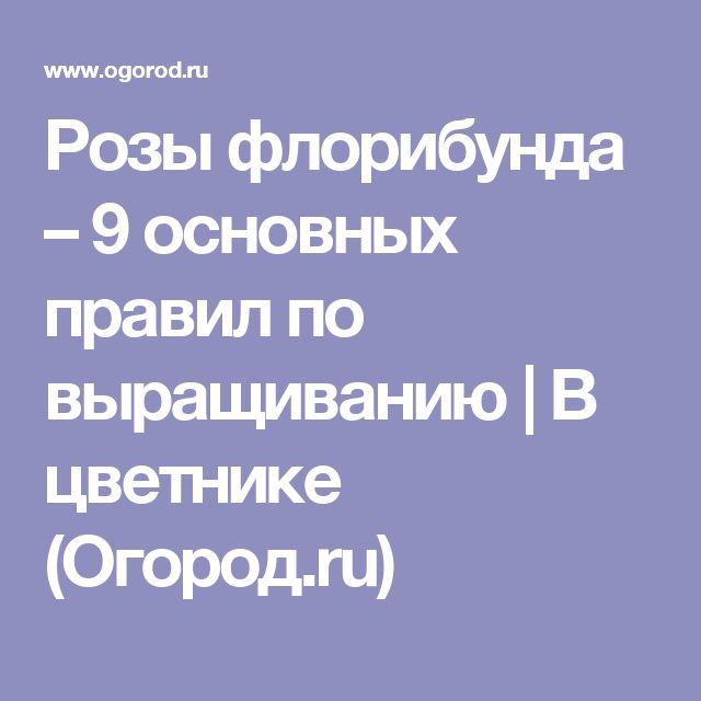 Розы флорибунда – 9 основных правил по выращиванию   В цветнике (Огород.ru)