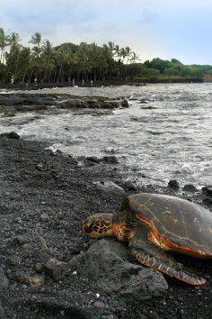 Big Island: Punalu'u Beach Black Sand Beach rocky.fast current. maybe turtles?!