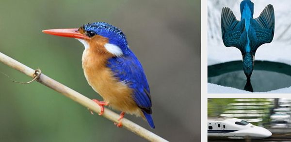 Examples of how biomimicry is shaping innovation in a variety of fields.