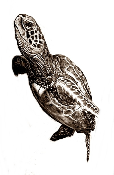 Tortuga marina | Ideas de tatuajes | Pinterest | Tatuajes, Tortugas ...