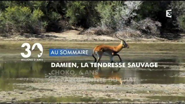 """WATCH: Inverdoorn features in French TV programme """"30 millions d'amis"""" (30 million friends)"""