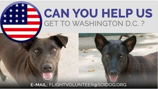 ***FLIGHT VOLUNTEERS WANTED***  Are you departing from THAILAND and flying to WASHINGTON DC, USA?  Can you help us get adopted dogs to their new homes?  If you are traveling FROM Thailand TO Washington DC, on BOOKED tickets with Thai Airways, All Nippon Airways (ANA), China Airlines, Qatar, Korean Air, JAL, EVA, Lufthansa or KLM, please EMAIL jan@soidog-foundation.org for more information.  http://www.soidog.org/en/be-a-flight-volunteer