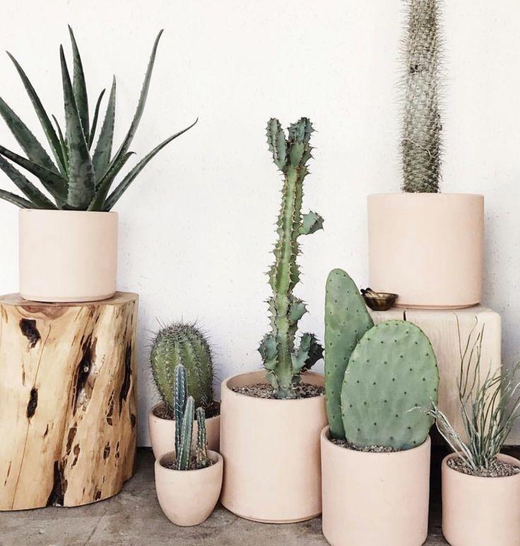 Cactus love @derivedesigncollective