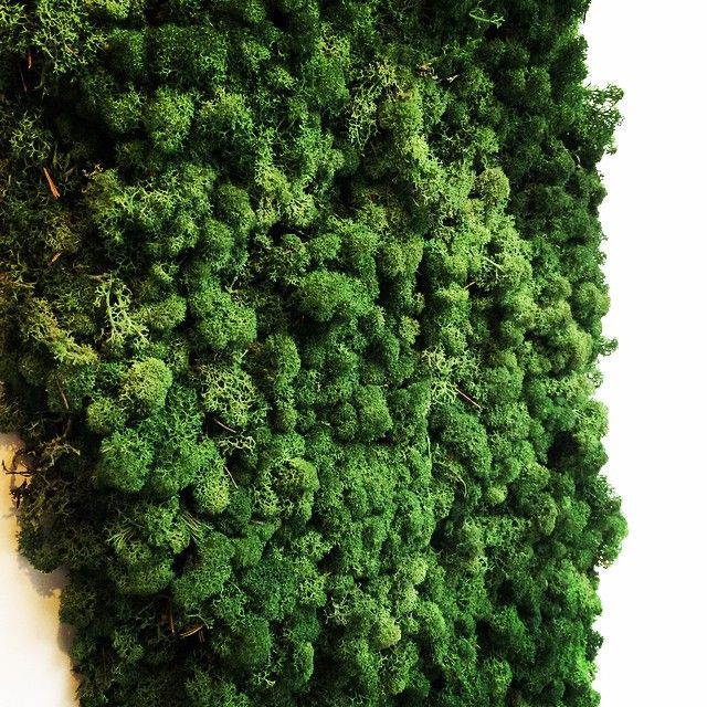Onze nieuwe mos wand @mrmoss #mrmoss #moswand #geitenwollenwinkel #groen
