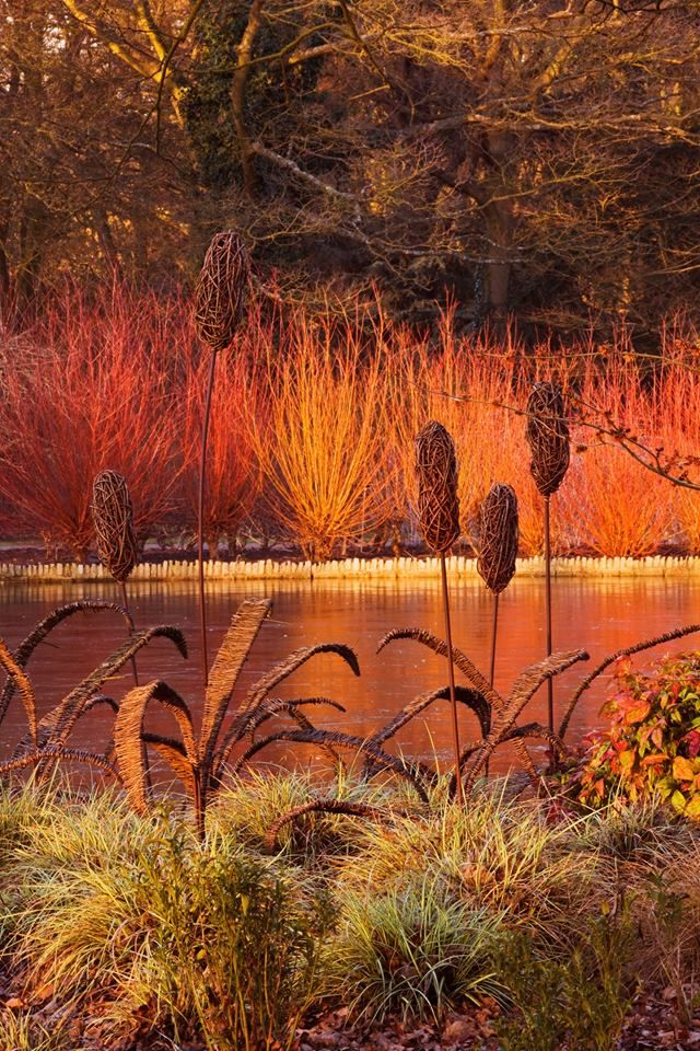 Winter In Technicolour Glory! View Across The Lake At RHS Wisley. Photo By  Clive