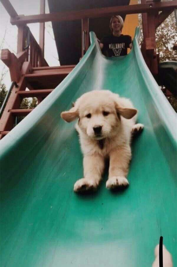Não Maltrate o Próximo  – Dogs I love