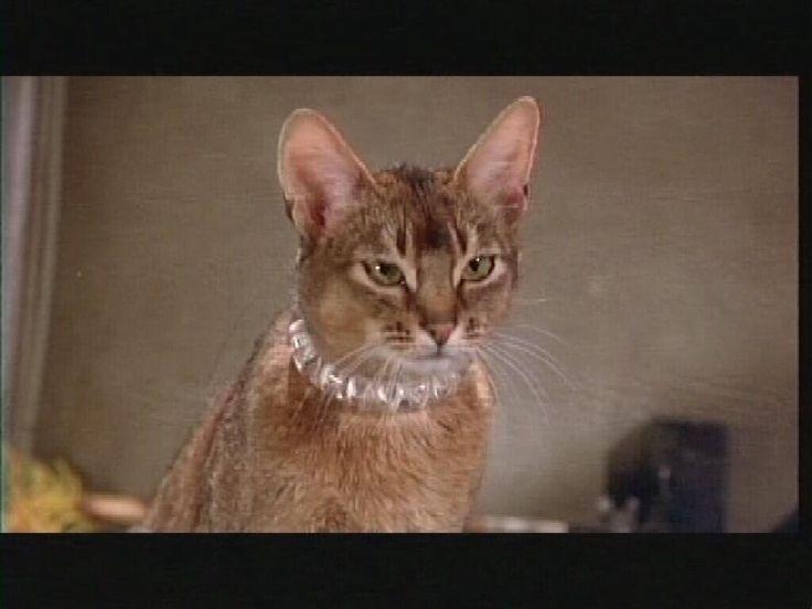 cat girl futa
