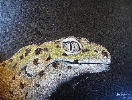 Leopard gecko by Judit Szalanczi