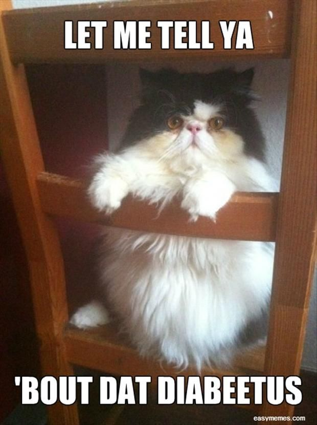 funny diabetes cat .PLEASE DON'T LET YOUR CAT OR YOUR CHILDREN GET OVERWEIGHT