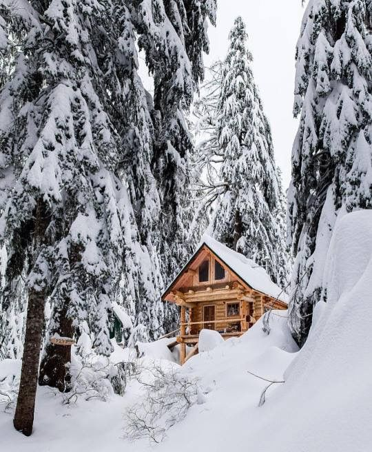 98052 best images about winter christmas on pinterest for Luxury winter cabins
