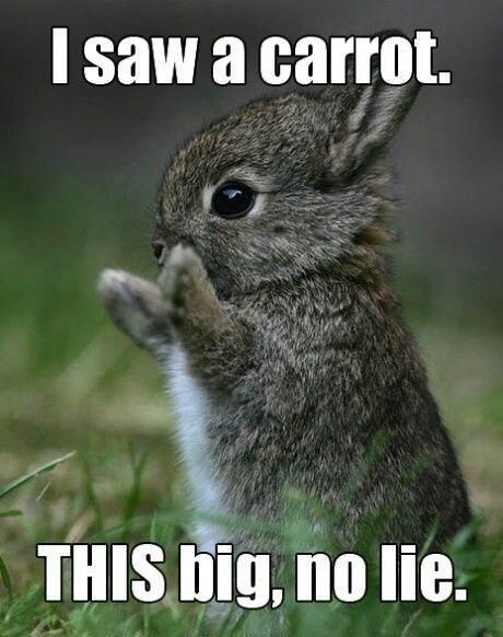 "#cute bunny ""I saw a carrot. This big, no lie."" lol - #funny @mobile9"