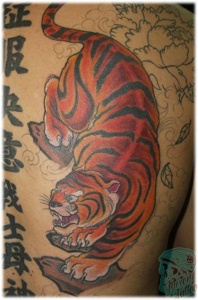 Tigre - Foto