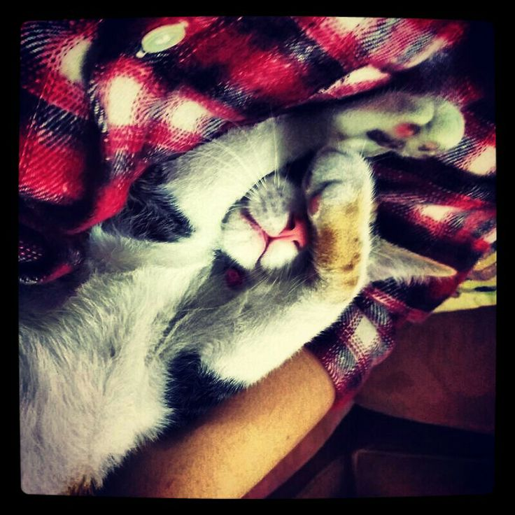 Aria durmiendo