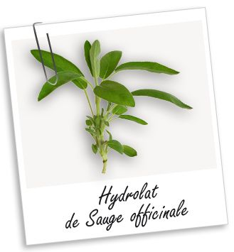 Hydrolat Sauge officinale BIO Aroma-Zone