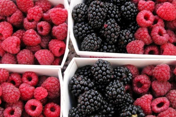 Una maschera viso levigante con i frutti di bosco dell'orto?    Prendete 4 o 5 fragole di bosco, una manciata di ribes e una di lamponi, un po' di yogurt magro naturale e, con l' aiuto di un mixer, riducete il tutto in una crema omogenea.    Facile, veloce e BIO