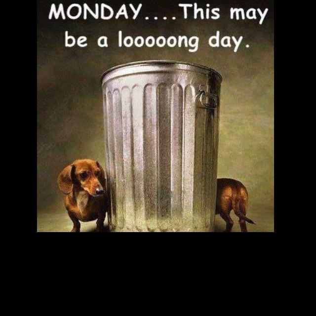 Monday's ... Ugh: Animals, Dogs, Dachshund, Mondays, Pet, Doxie, Weiner