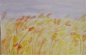 Opetusvinkkejä Alhojärven koululta keltainen viljapelto