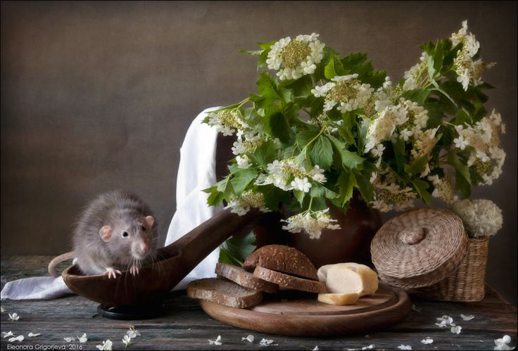 Крысиные истории. Дачное лето Eleonora Grigorjeva