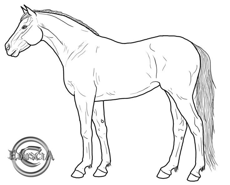 Drawing Lines With Qt : Best coloring pages of horses images on pinterest