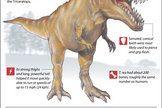 Learn about T. rex's massive teeth, bones, habitat and other dinosaur secrets.