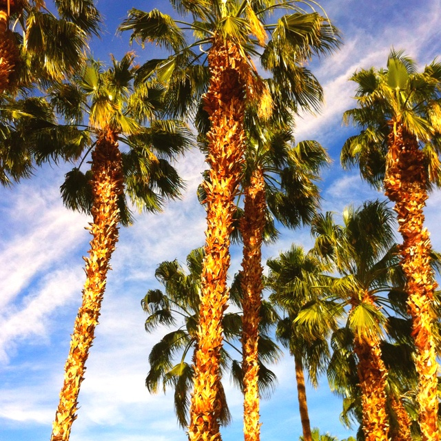 Palm Springs Tourism And Holidays Best Of Palm Springs: 17 Best Ideas About Palm Desert On Pinterest