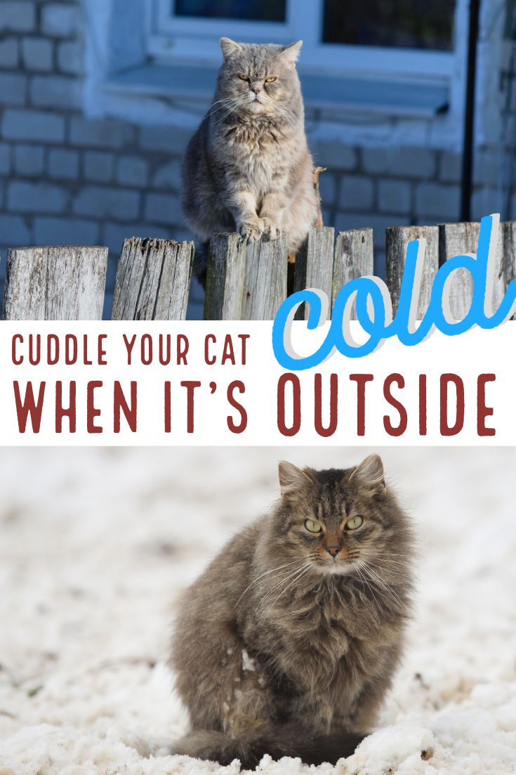 Is It Too Cold Outside For My Pet Cats Outside Pets Pet Safety
