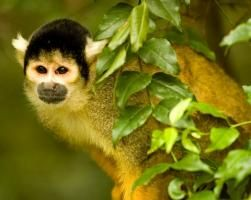 About monkeyland birds of eden safaris jungle tourist attraction plettenberg bay knysna george wilderness tsitsikamma jungle forest holiday | Monkeyland Primate Sanctuary Plettenberg Bay Activities Garden Route Adventures South Africa